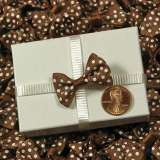 Canyon Brown Itty Bitty Bow